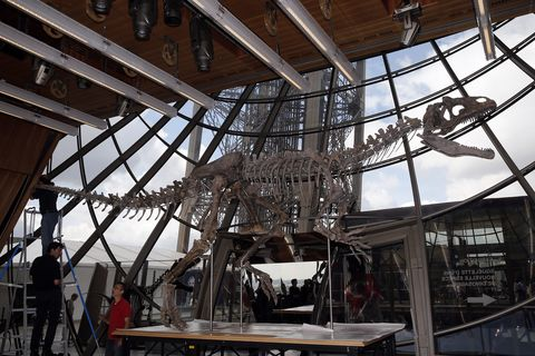 Theropod A Carnivorous Dinosaur Skeleton Is Displayed At The Eiffel Tower Prior To Be Sold On Auction