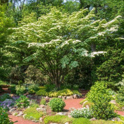 shade garden in late spring in elizabeth park, west hartford, connecticut