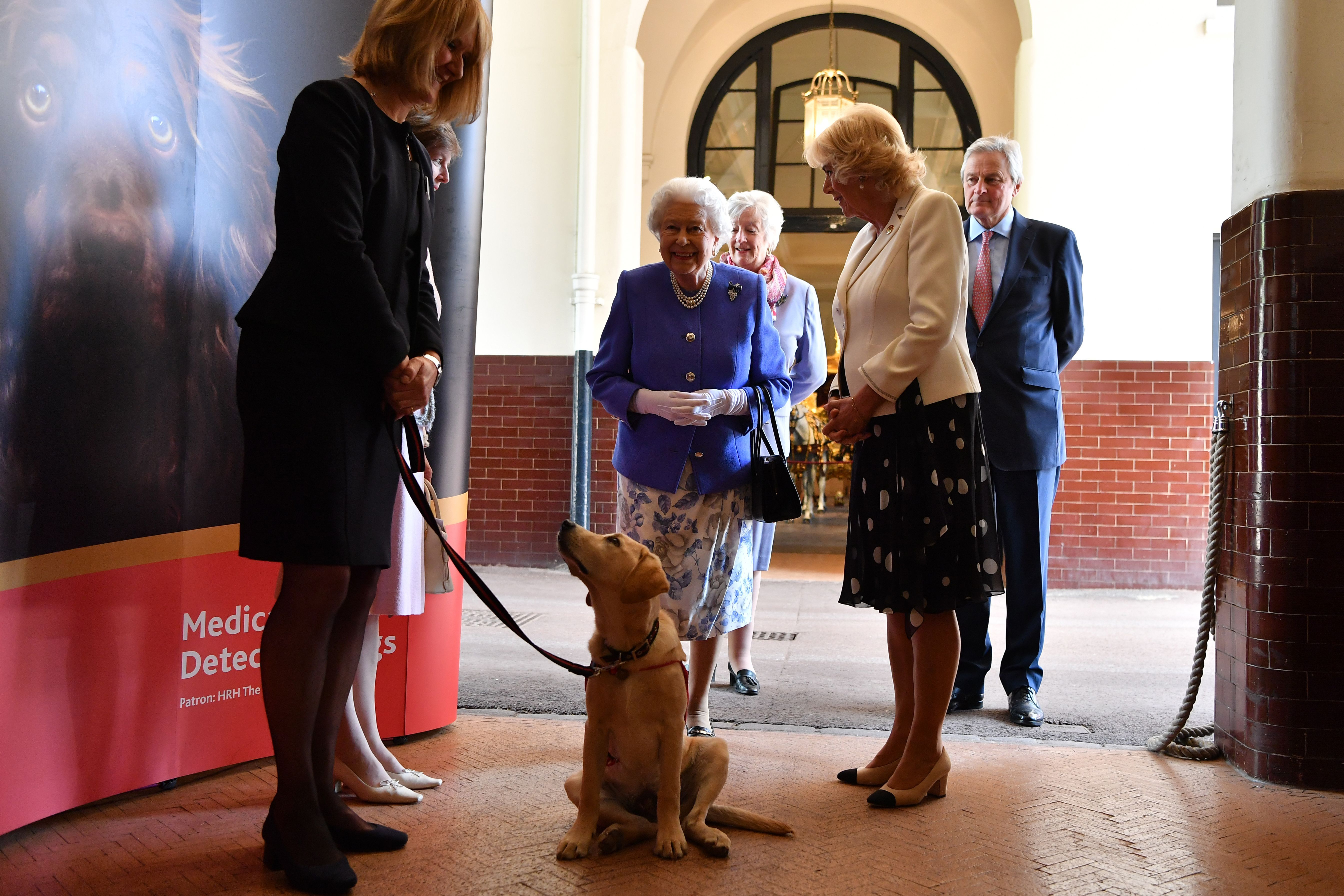 queen elizabeth and camilla puppies
