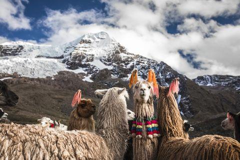 Cosa si mangia in Perù migliore destinazione culinaria al mondo