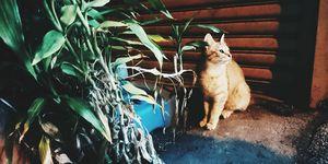 Hoe houd je je kat uit de tuin