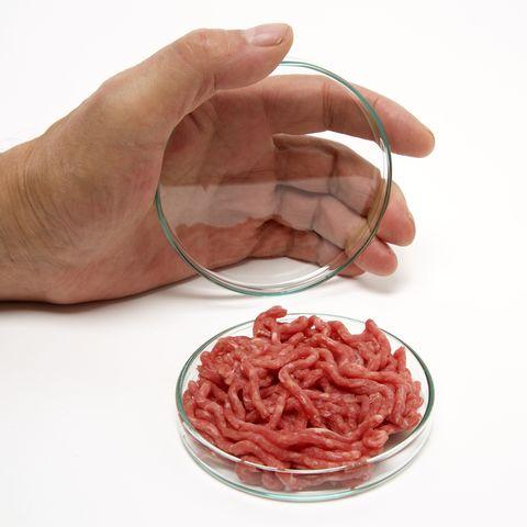 Minced meat in petri dish