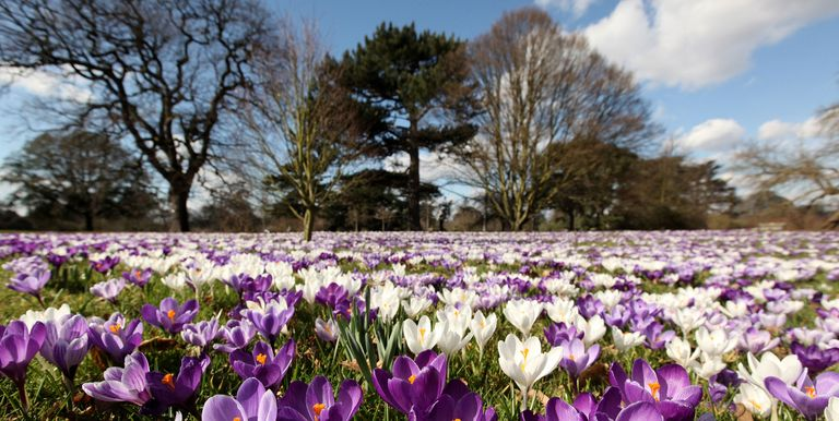Beautiful Places To See Spring Flowers In London