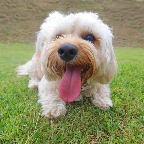 Dog laying on grass