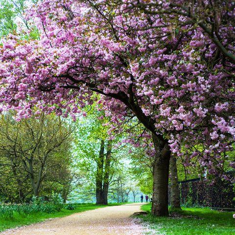 spring uk