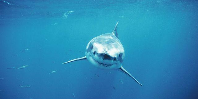 squali attacco