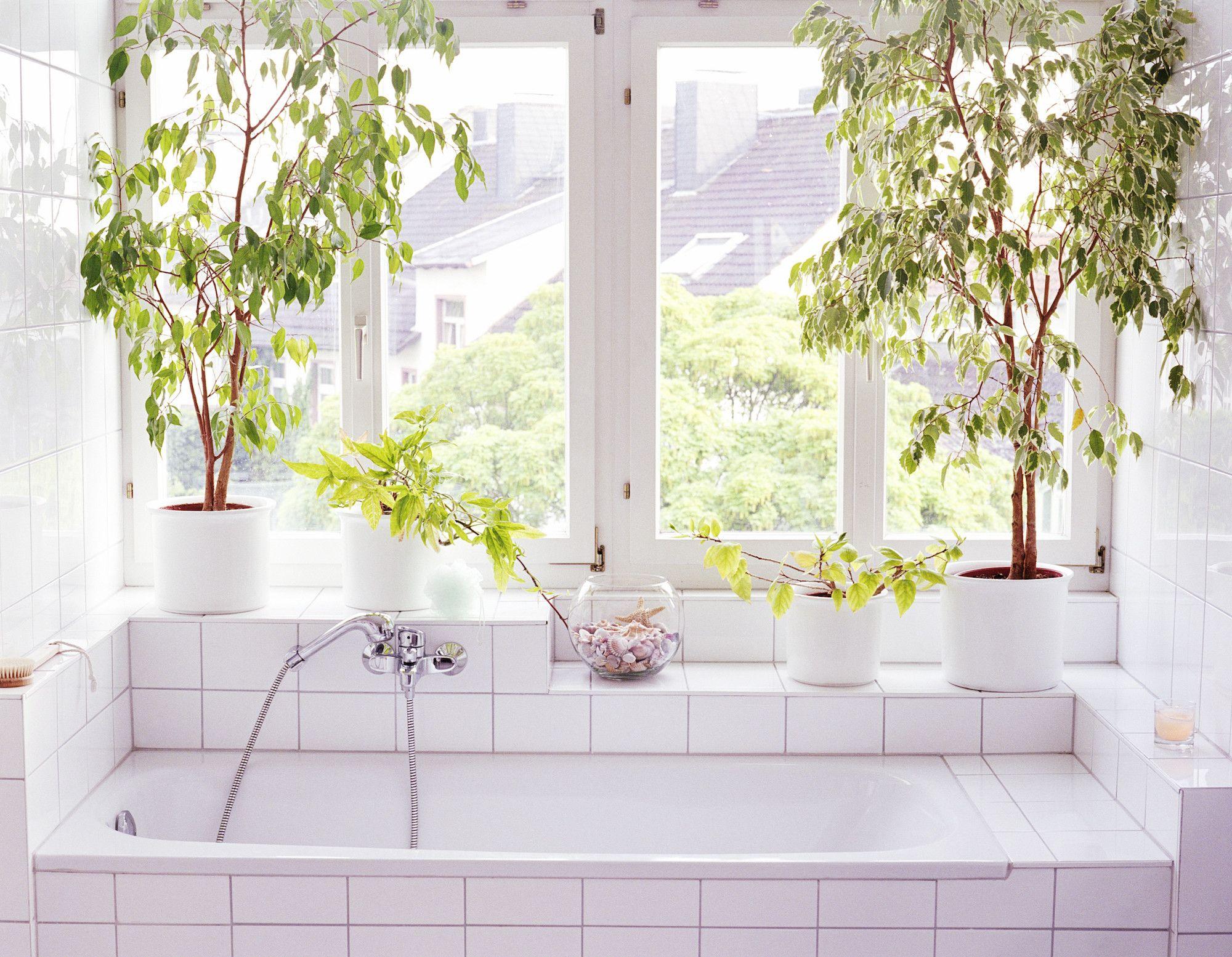 20 Best Bathroom Plants   Bathroom Plants Online