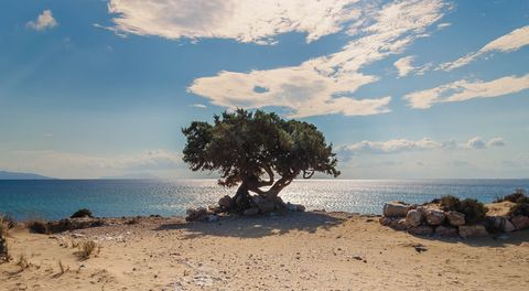 Tree, Sky, Nature, Sea, Beach, Shore, Natural landscape, Ocean, Cloud, Coast,