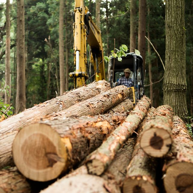 logger moving logs in forest