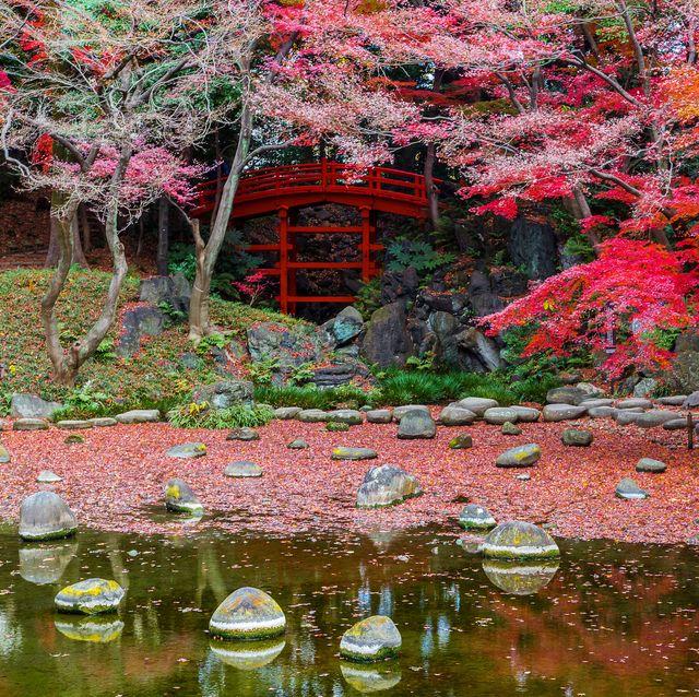 Los jardines más bonitos del mundo. Hoishikawa Korakue. Tokyo.