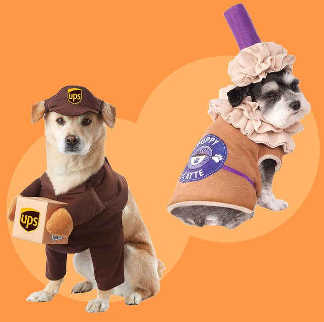 Best Cute Custumes Halloween 2020 35 Best Dog Costumes for Halloween 2020   Cute & Funny Halloween