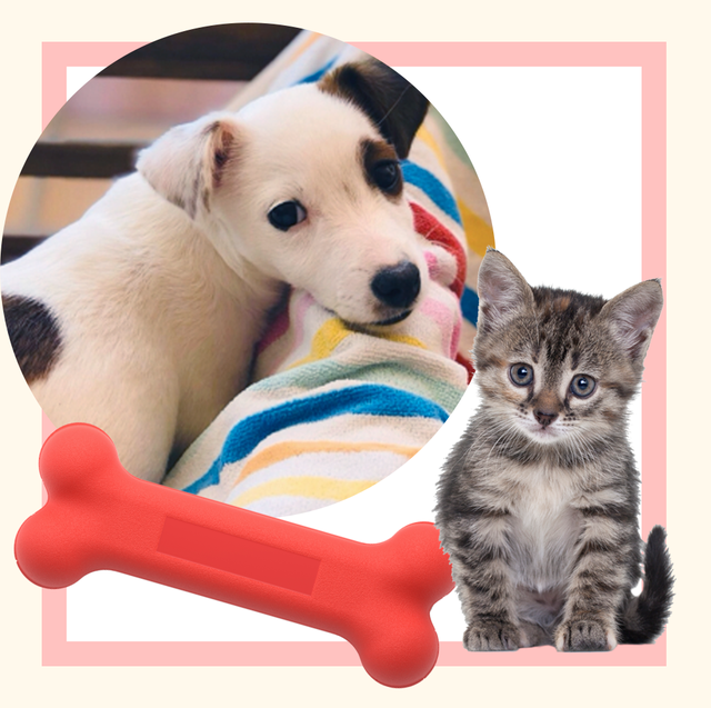 puppy and kitten adopted during the pandemic