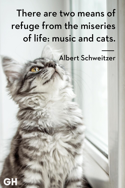 Albert Schweitzer - cat quotes