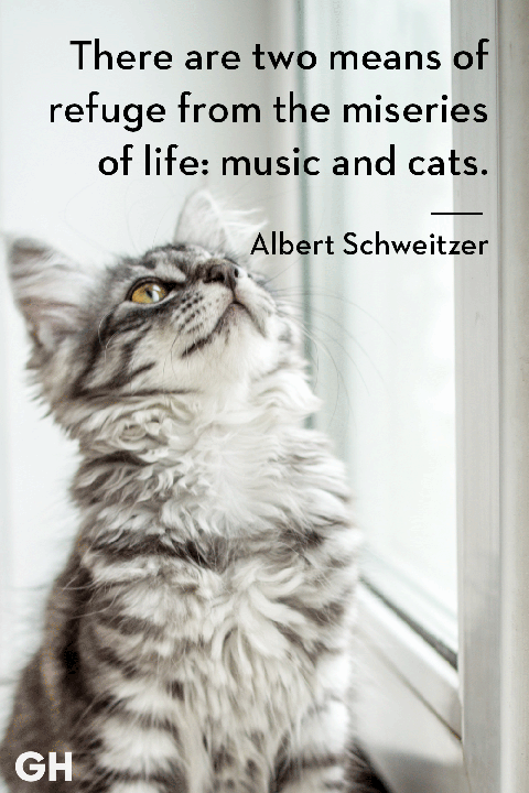 Albert Schweitzer - cat quotes