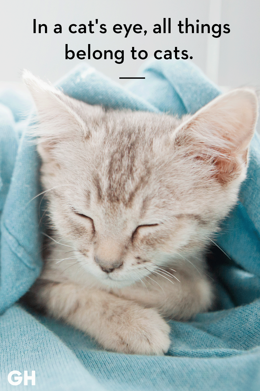 25 Best Cat Quotes That Perfectly Describe Your Kitten