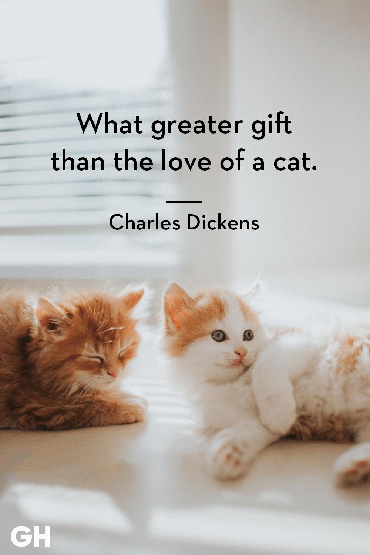 Cat lovers meet singles