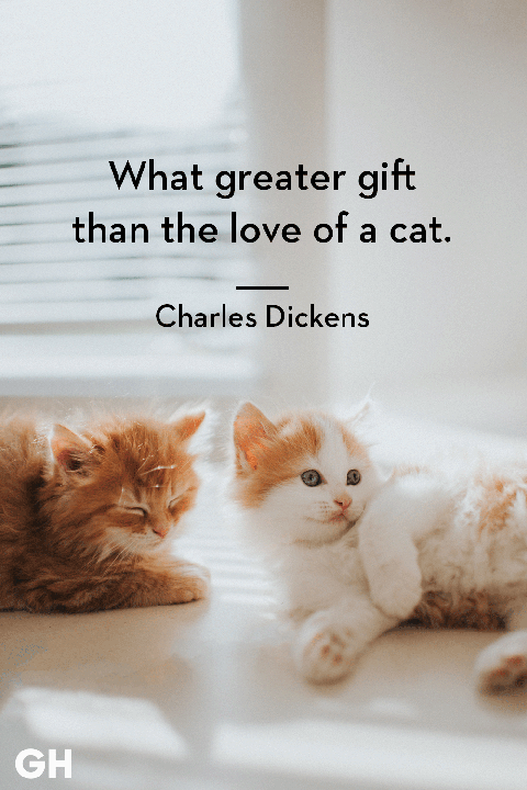 Charles Dickens - cat quotes