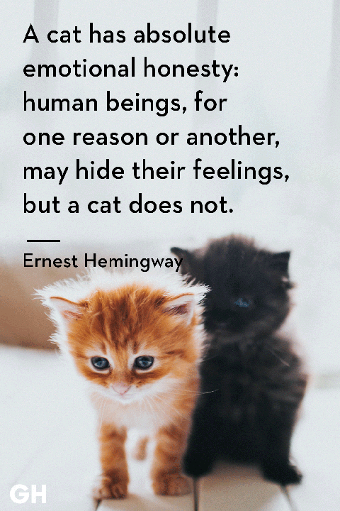60 Best Cat Quotes That Perfectly Describe Your Kitten Funny And Best Cat Loss Quotes