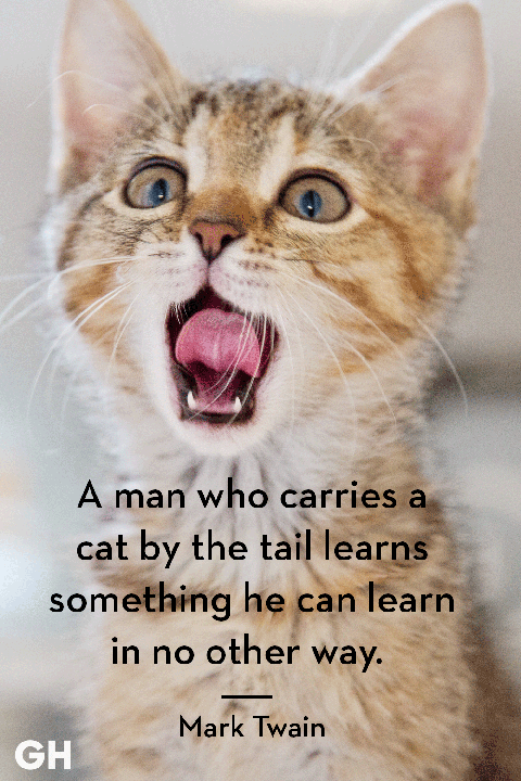 60 Best Cat Quotes That Perfectly Describe Your Kitten Funny And Delectable Cat Loss Quotes