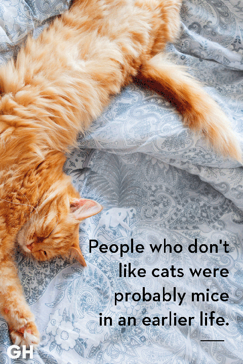28761fcd 25 Best Cat Quotes That Perfectly Describe Your Kitten - Funny and ...