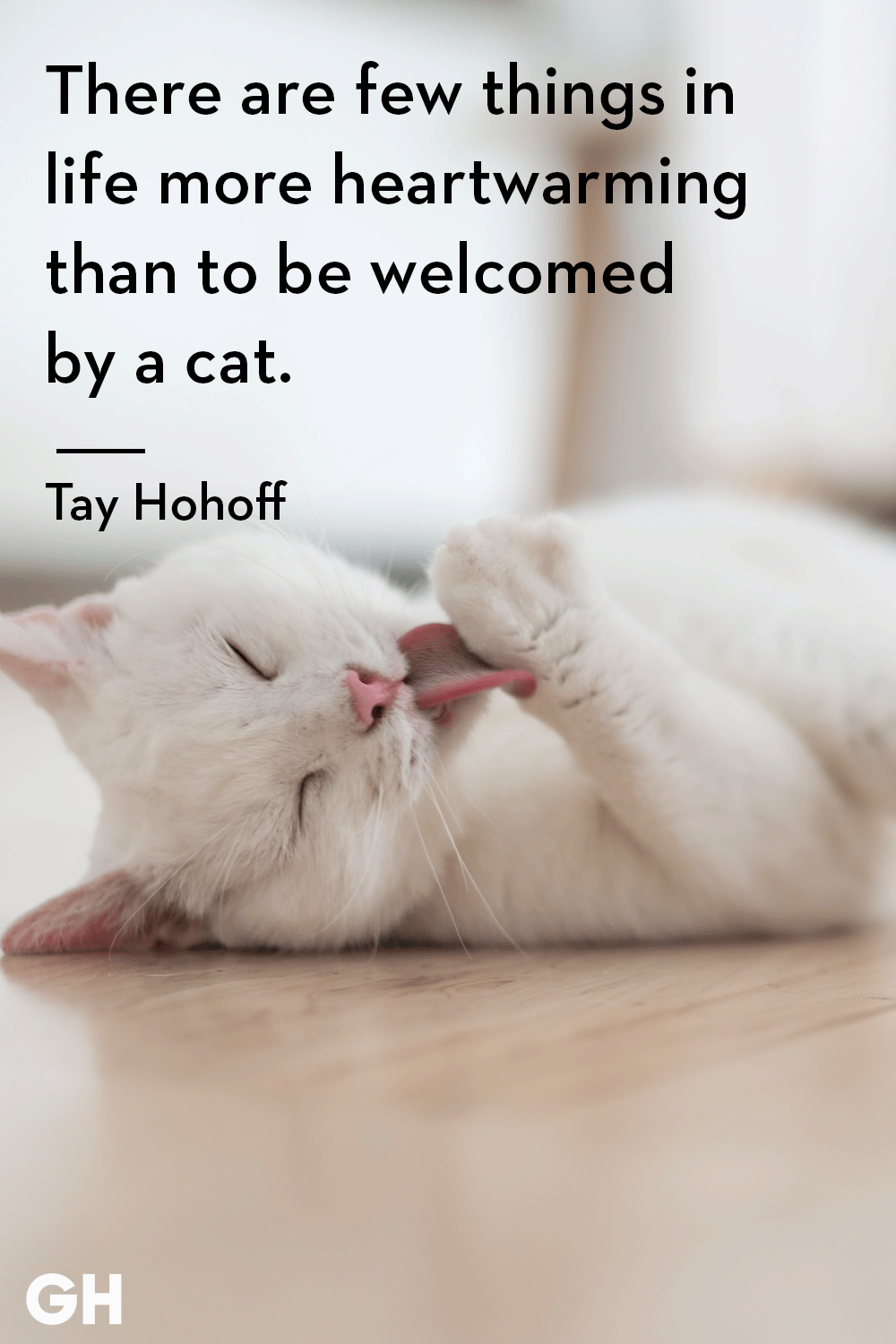 25 Best Cat Quotes That Perfectly Describe Your Kitten - Funny and