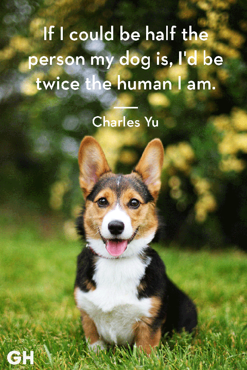 30 Dog Quotes That Every Animal Lover Will Relate To ...