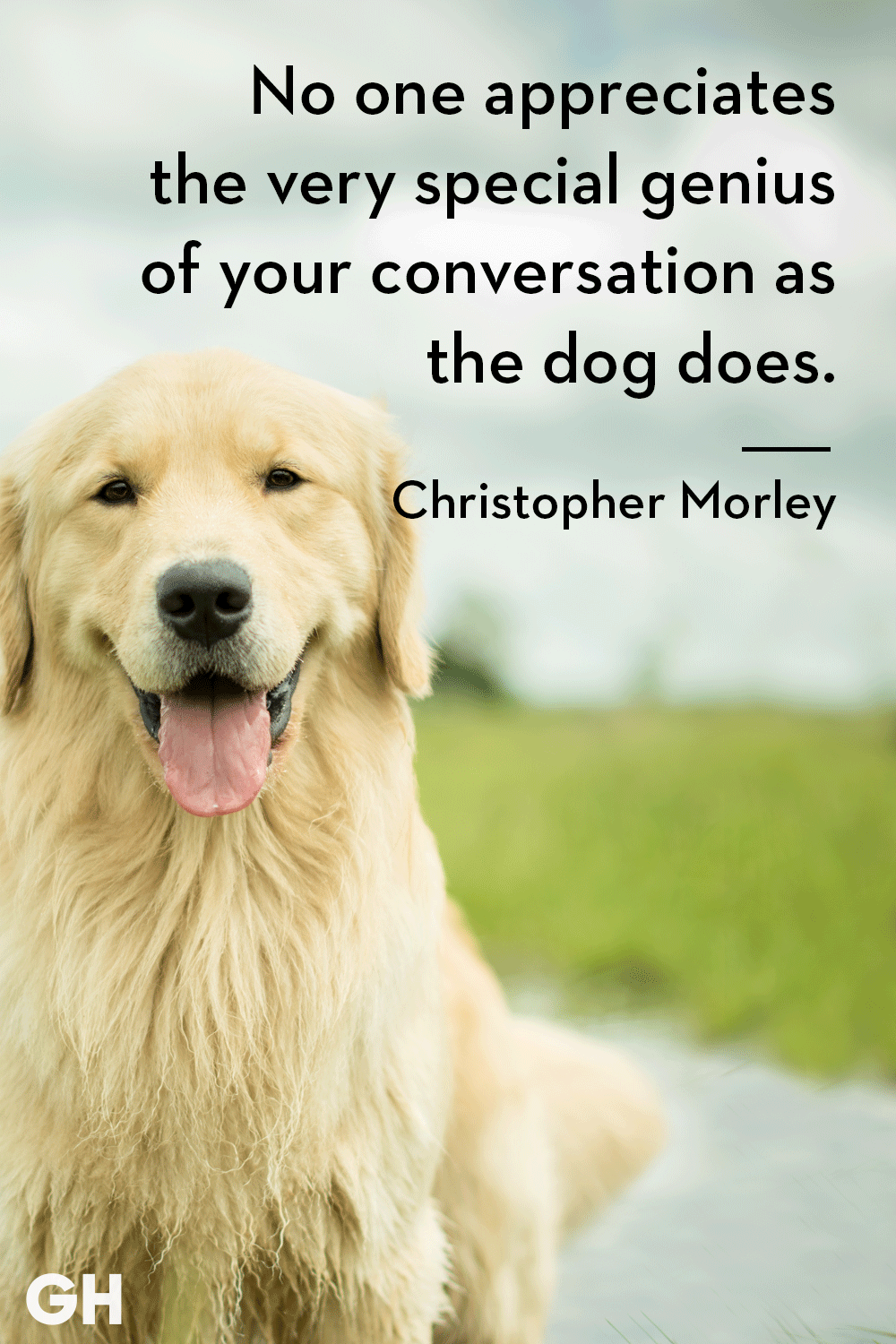 Quotes About Dogs | 30 Dog Quotes That Every Animal Lover Will Relate To Best Dog Quotes