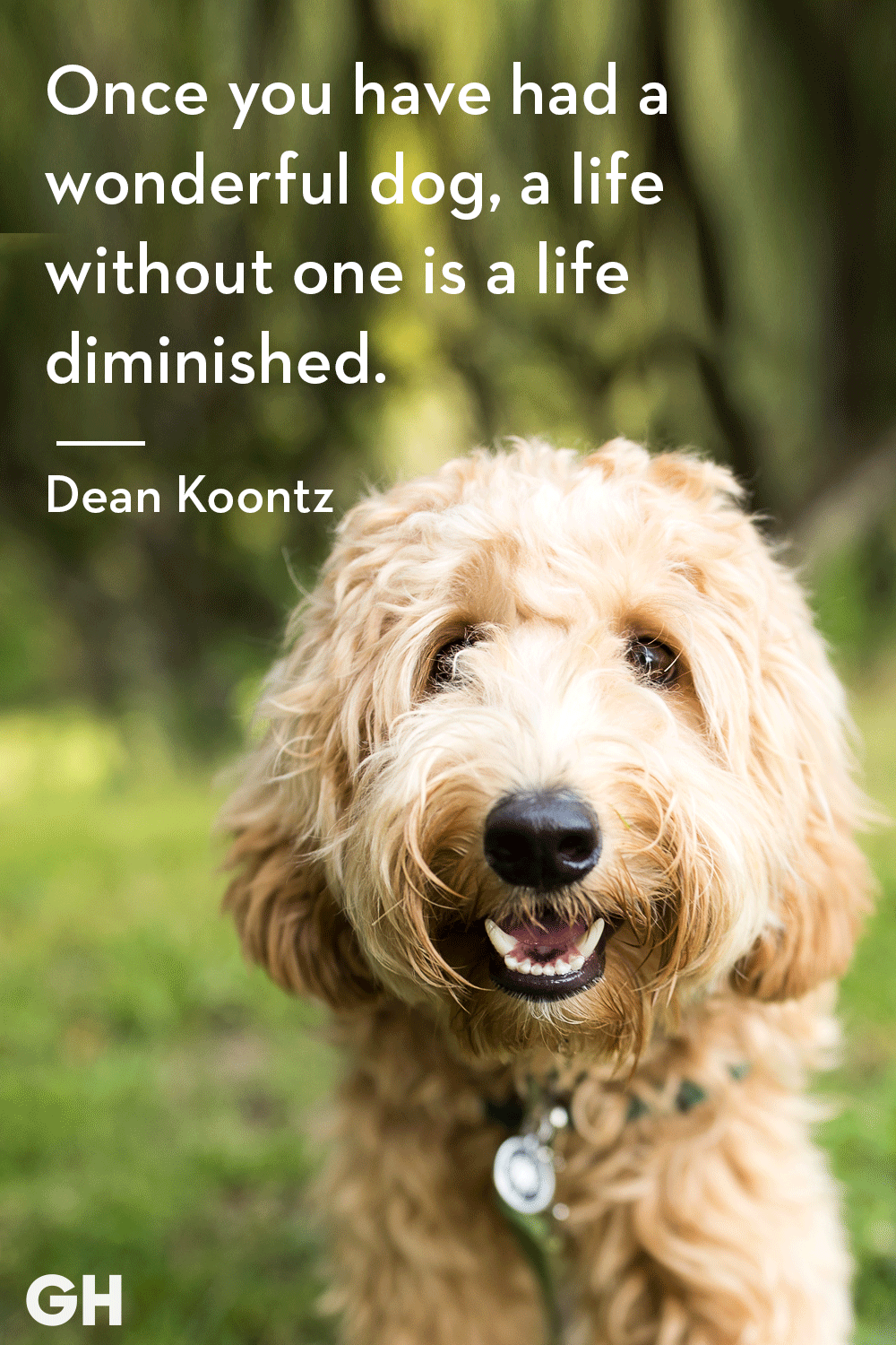 30 Dog Quotes That Every Animal Lover Will Relate To - Best