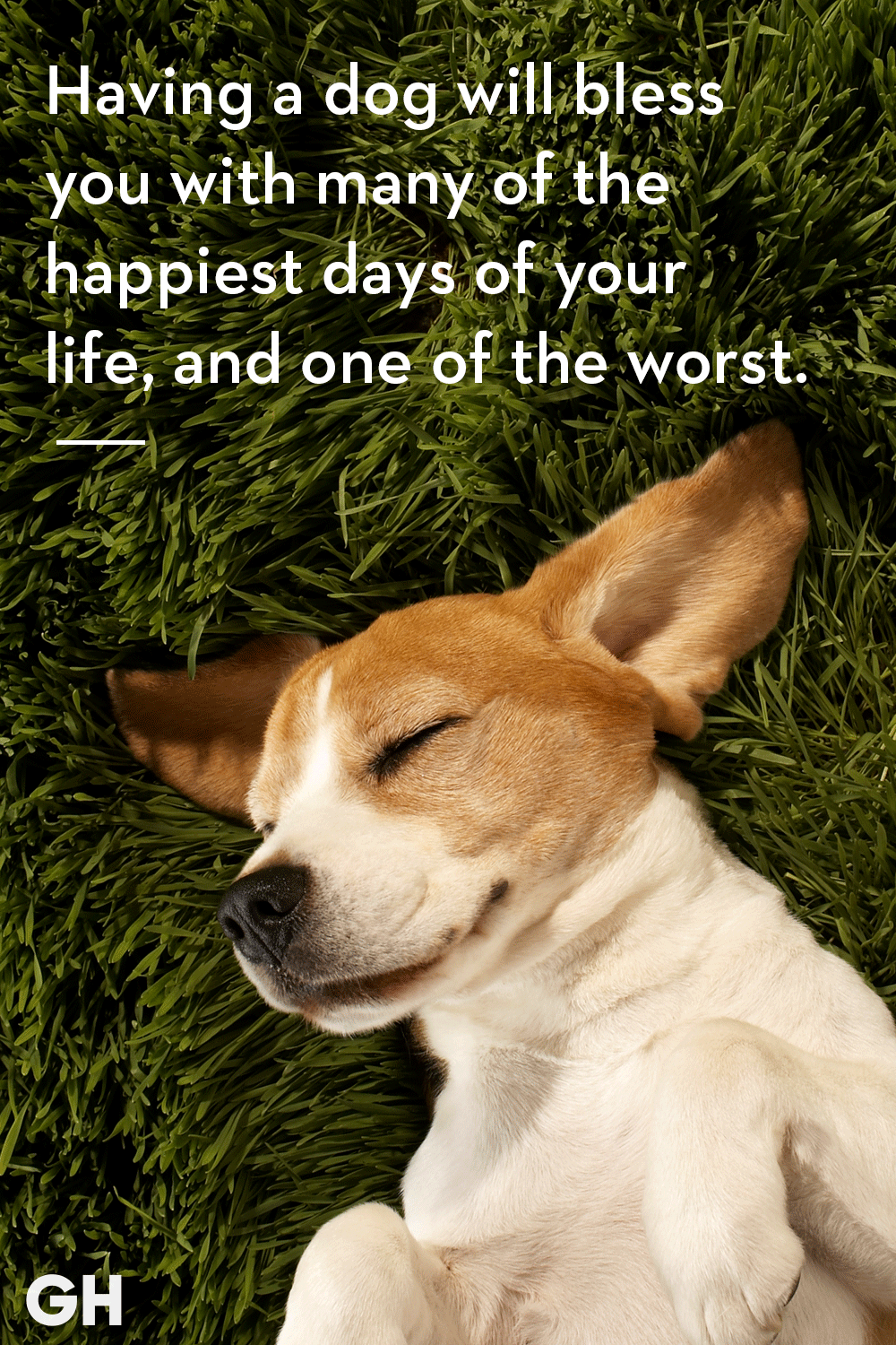 30 Dog Quotes That Every Animal Lover Will Relate To - Best Dog Quotes