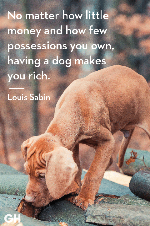30 Dog Quotes That Every Animal Lover Will Relate To - Best ...