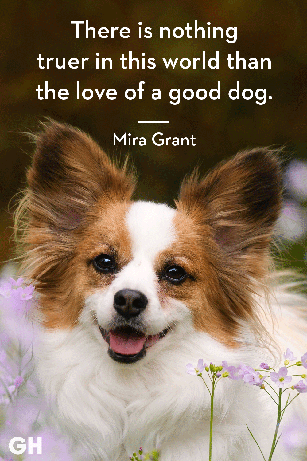 Dog Quotes 30 Dog Quotes That Every Animal Lover Will Relate To   Best Dog Quotes Dog Quotes