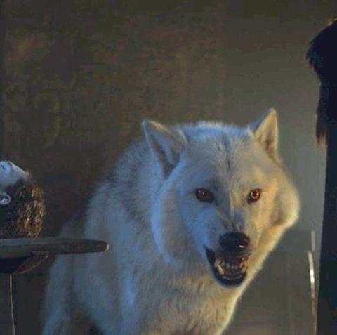 canis lupus tundrarum, Canidae, Wolf, Czechoslovakian wolfdog, Wolfdog, Canis, Wildlife, Carnivore, Greenland dog, Kishu,