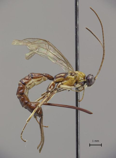 Insect, Mantidae, Net-winged insects, Invertebrate, Pest, Dragonflies and damseflies, Organism, mayflies, Membrane-winged insect, Parasite,