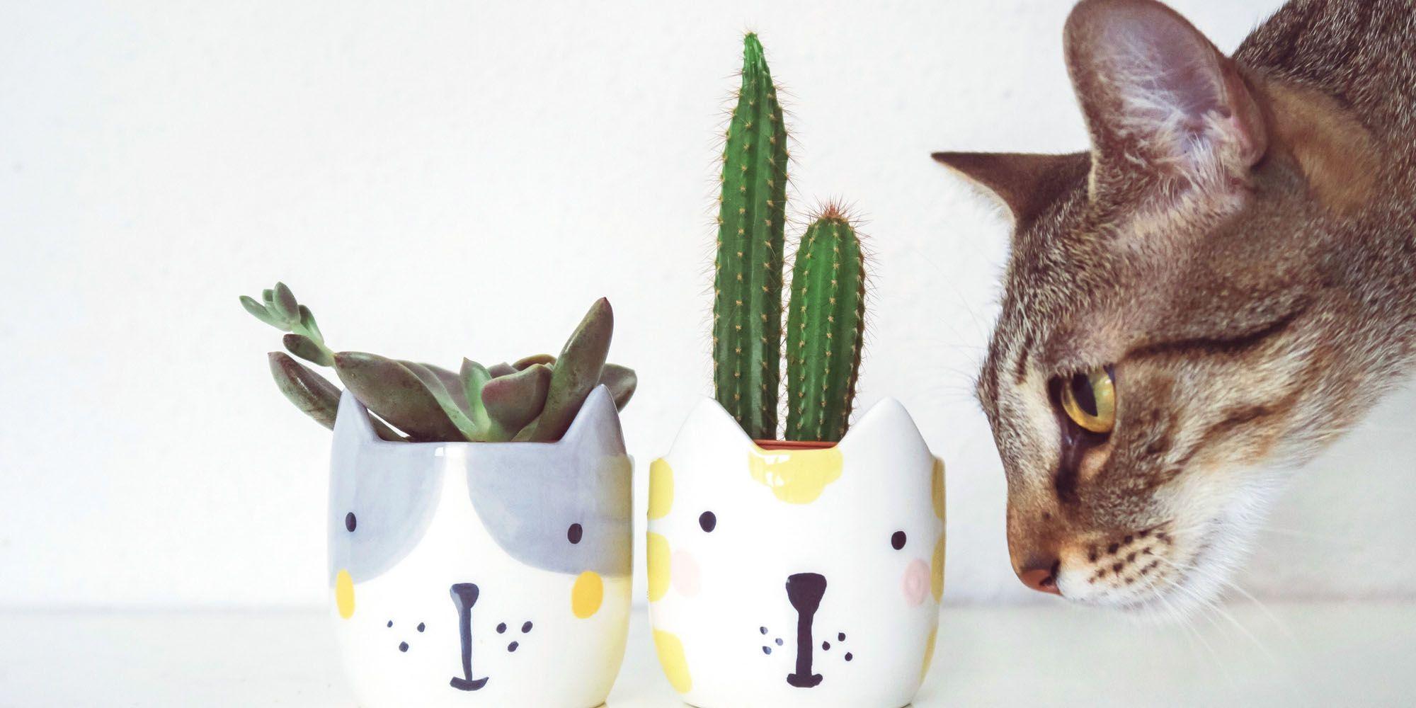 Giftige planten voor katten, plant, giftig, kat