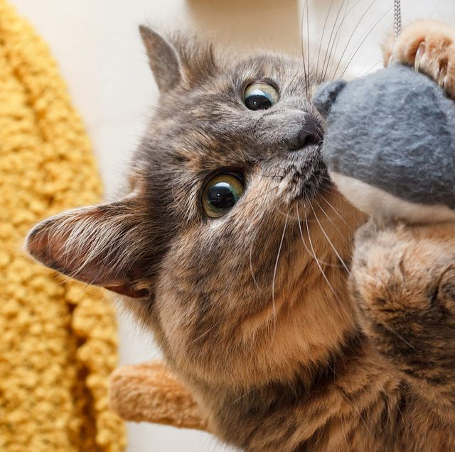 50 Best Gifts For Cat Lovers In 2020 Fun Cat Gift Ideas