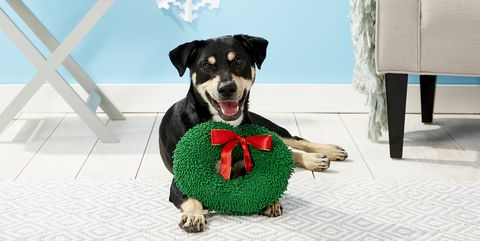 40 best gifts for dog lovers 2018 unique dog owner gift ideas