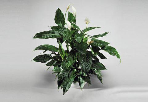 Le piante verdi che purificano l\'aria in camera da letto