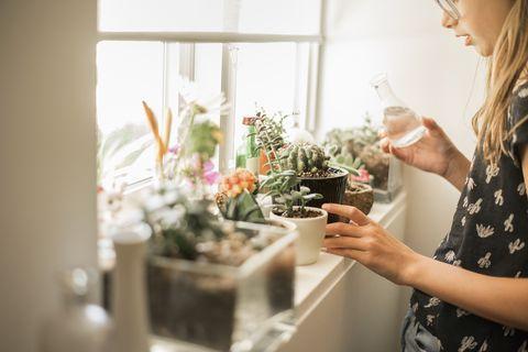 La jeune fille à table dans une fenêtre où les plantes sont ensoleillées.