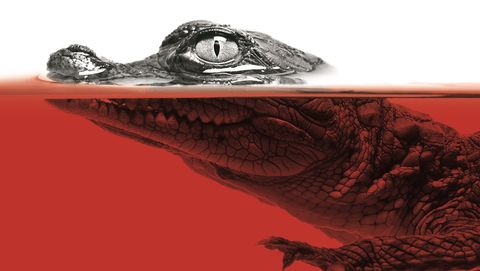 Text, Adaptation, Organism, Book cover, Illustration,