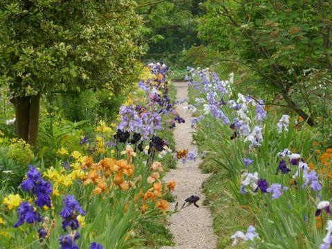 Flower, Flowering plant, Plant, Garden, Lavender, Spring, Botany, Wildflower, Botanical garden, Grass,