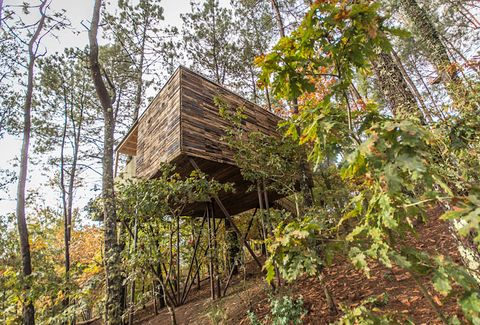 cabaña del arbol en un bosque en outes, la coruña