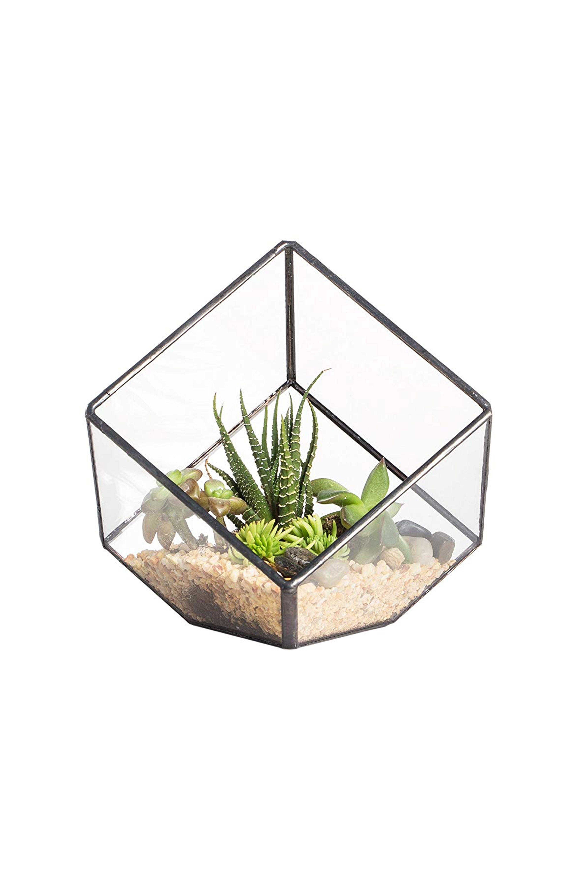 best air plant displays