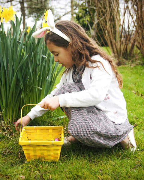 young girl with bunny ears picking up easter chocolate eggs in the garden in the uk