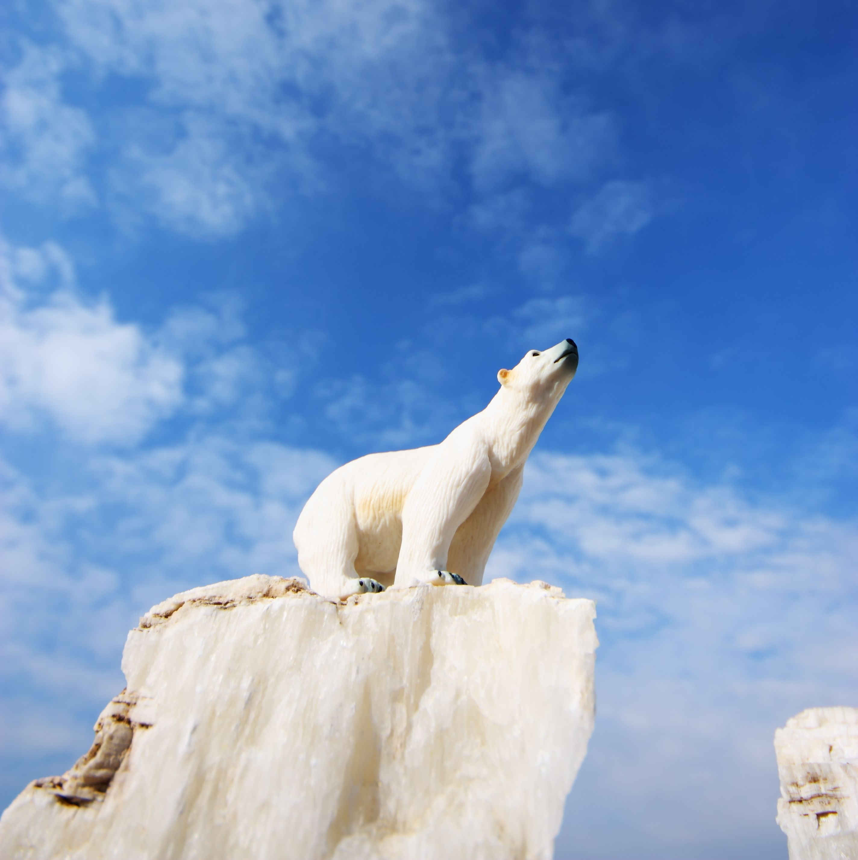 Polar Bear Ice Blue Sky