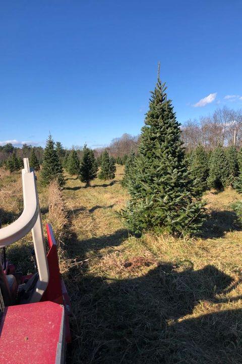 Glove Hollow Christmas Tree Farm Best