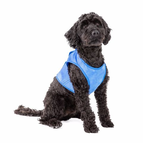 Go Fresh Pet Ice Cooling Dog Vest Small - Pets at Home