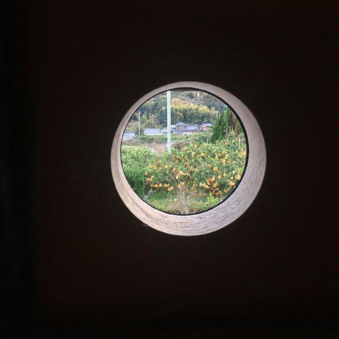Green, Window, Tree, Circle, Botany, Leaf, Architecture, Plant, Daylighting, House,
