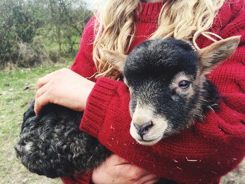 Mammal, Wool, Goats, Nose, Livestock, Interaction, Photography, Fur, Plant, Ear,