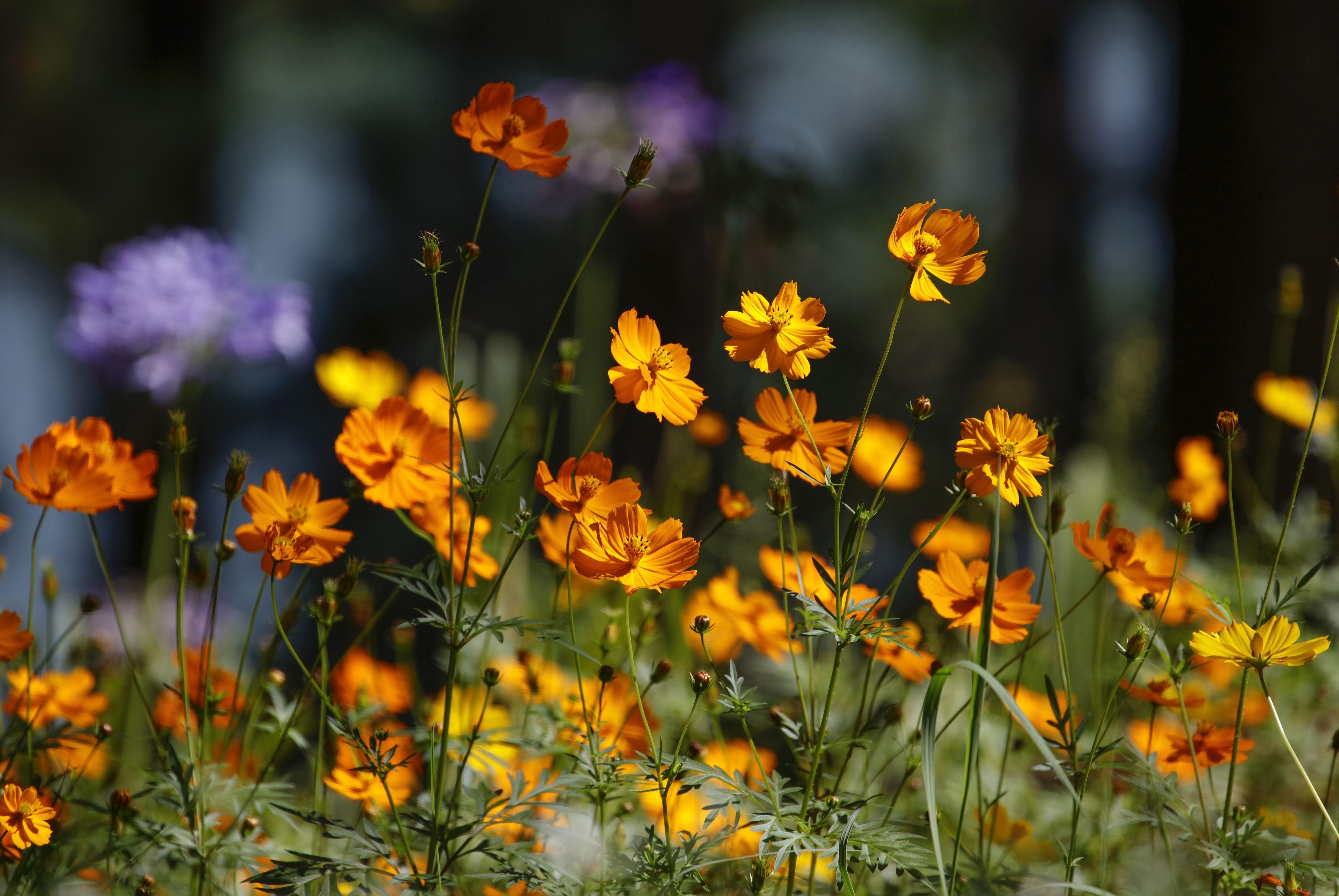 September gardening to do list gardening jobs for september autumn september gardening to do list gardening jobs for september autumn season izmirmasajfo