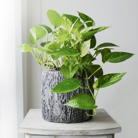 benefits of plants -breathe better air